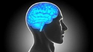 cerebro-size-598