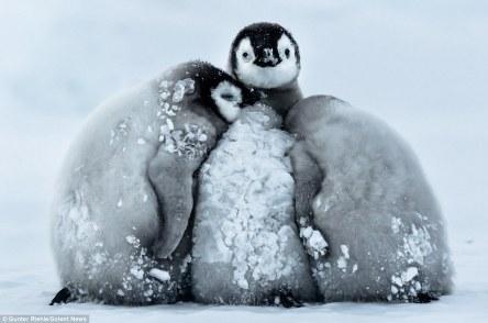 pinguim_a