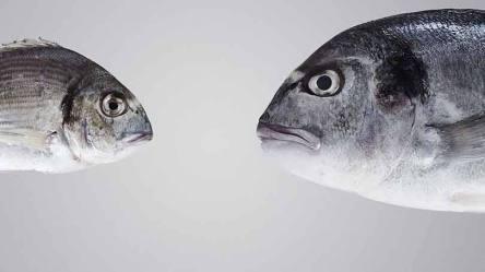 size_810_16_9_peixes