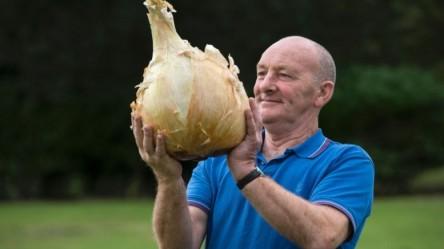 onion111-777x437