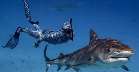 roupa-de-mergulho-invisivel-para-os-peixes-e-tubaroes-962x500