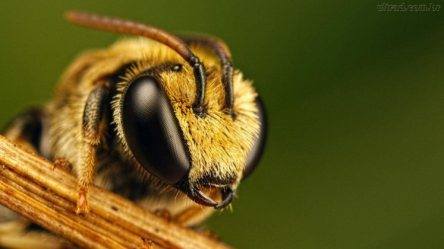 saiba-o-que-esta-por-tras-das-misteriosas-sociedades-das-abelhas-2