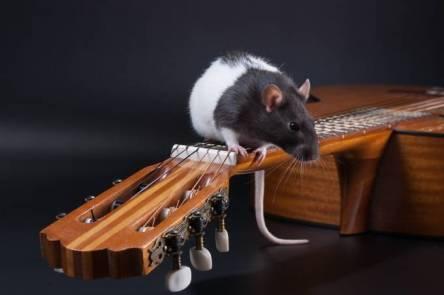 terapia-genc3a9tica-recupera-audic3a7c3a3o-de-ratinhos-surdos2